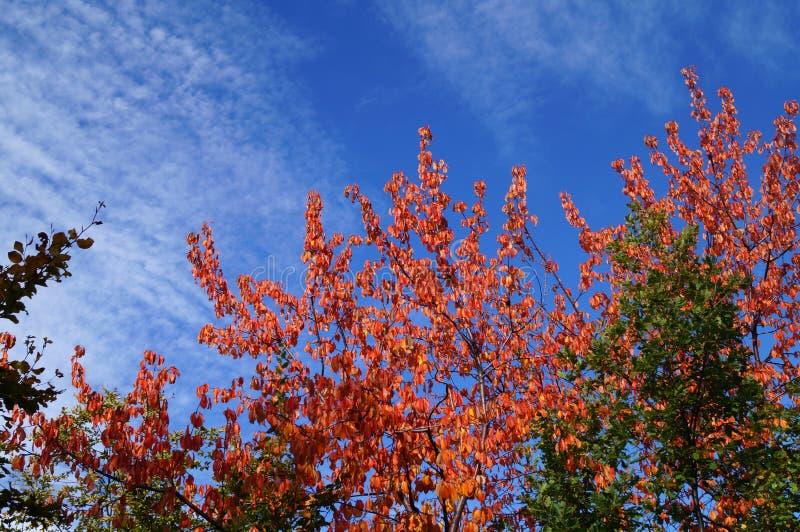 Explosão das cores no outono fotografia de stock royalty free