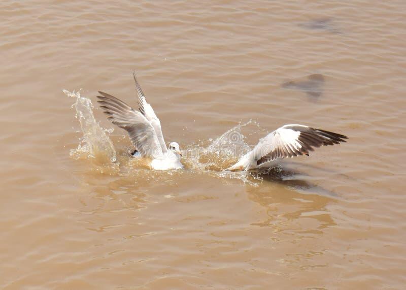 Explosión Phu del pájaro fotos de archivo