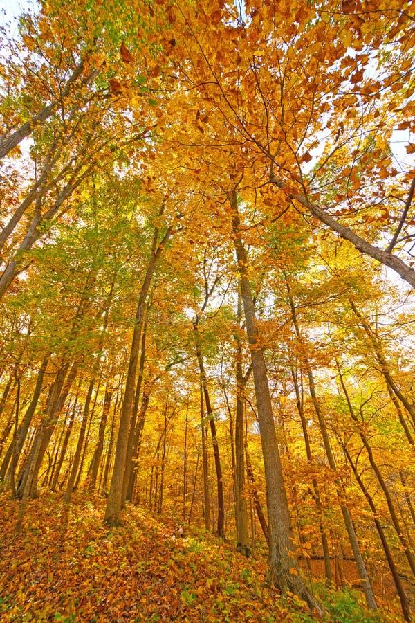 Explosion av nedgången i den Midwest skogen arkivbilder