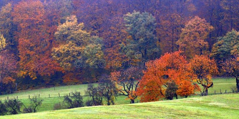 Explosion de couleur d'automne images libres de droits