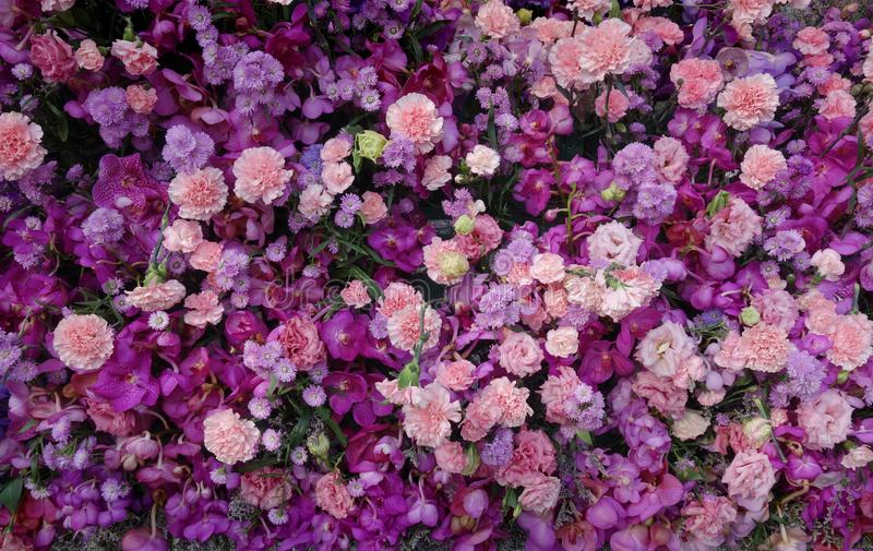 Pure Purple and Pink Array of Flowers Background royalty free stock images
