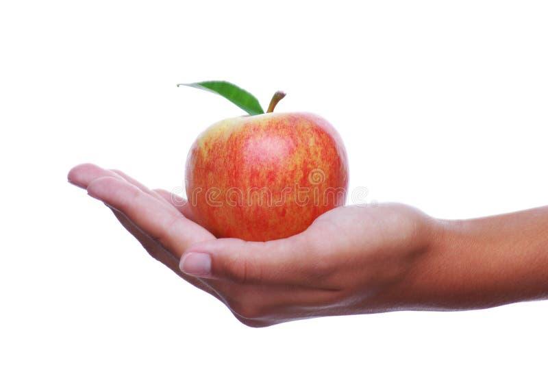 Explotación agrícola Apple de la mano de Womans imágenes de archivo libres de regalías