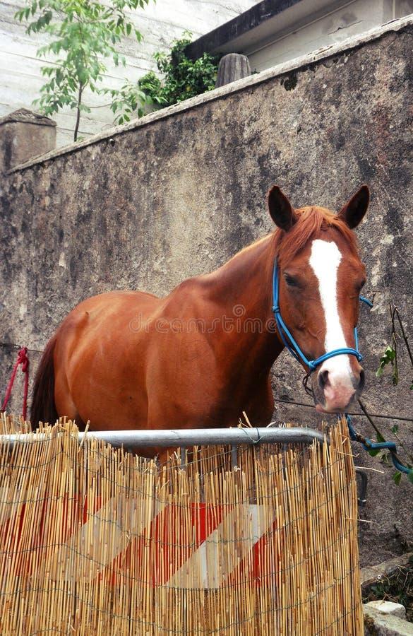 Expo dei cavalli: un cavallo in sua scatola immagine stock libera da diritti