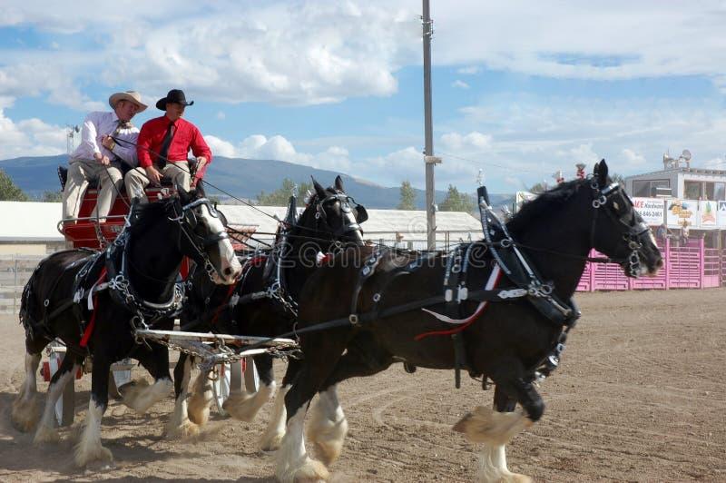 Expo 2013 do cavalo em Montana fotos de stock