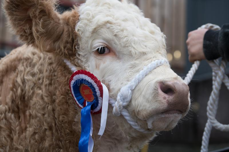 Expo 2017, Gran Bretaña de Agri fotografía de archivo