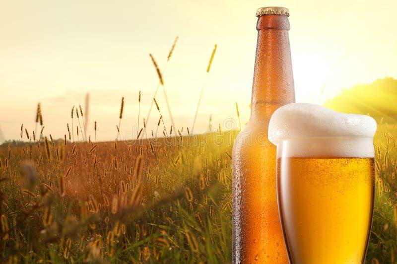 Exponeringsglas av öl och flaskan mot vetefält arkivfoton