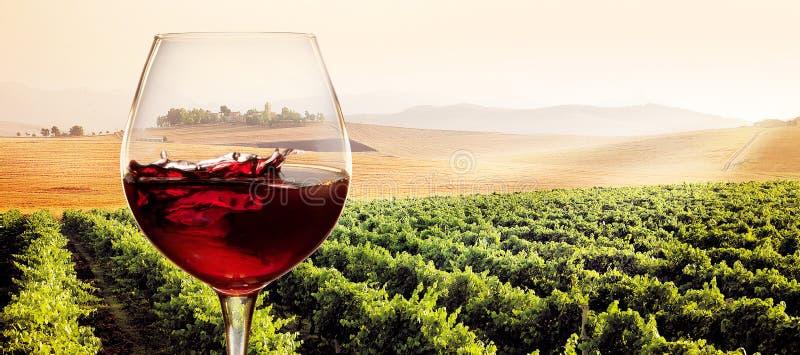 Exponeringsglas av rött vin i soligt vingårdlandskap arkivbild