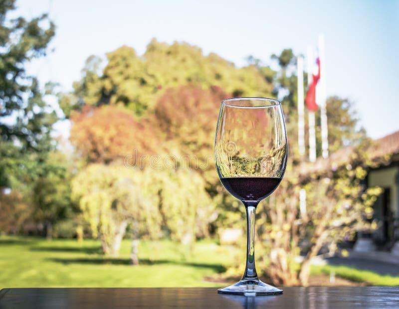Exponeringsglas av vin i en chilensk vingård - Santiago, Chile royaltyfria bilder