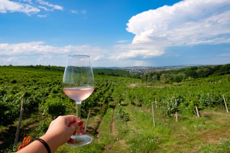 Exponeringsglas för vin för kvinnainnehav rosa i vingård royaltyfria foton
