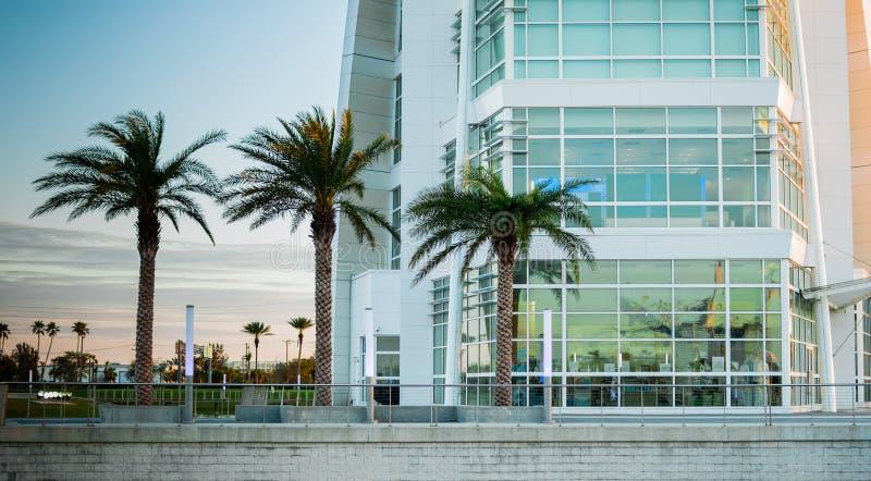Exponeringsglasfasadbyggnad med tre palmträd framme fotografering för bildbyråer