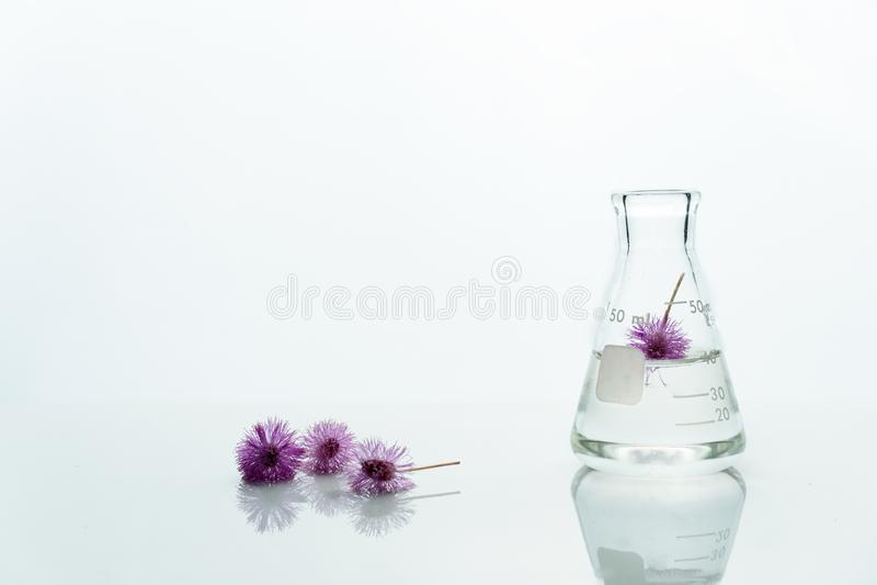Exponeringsglasflaska med vatten och den rosa purpurfärgade gulliga blomman i vit kosmetisk bioteknikvetenskapsbakgrund royaltyfri foto