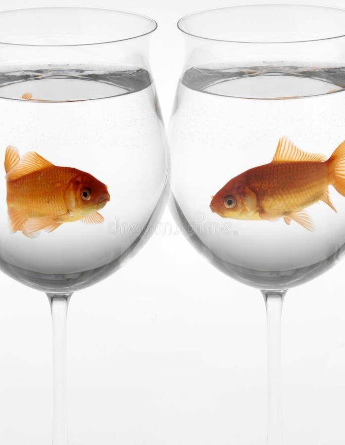 exponeringsglasguldfiskar royaltyfri bild