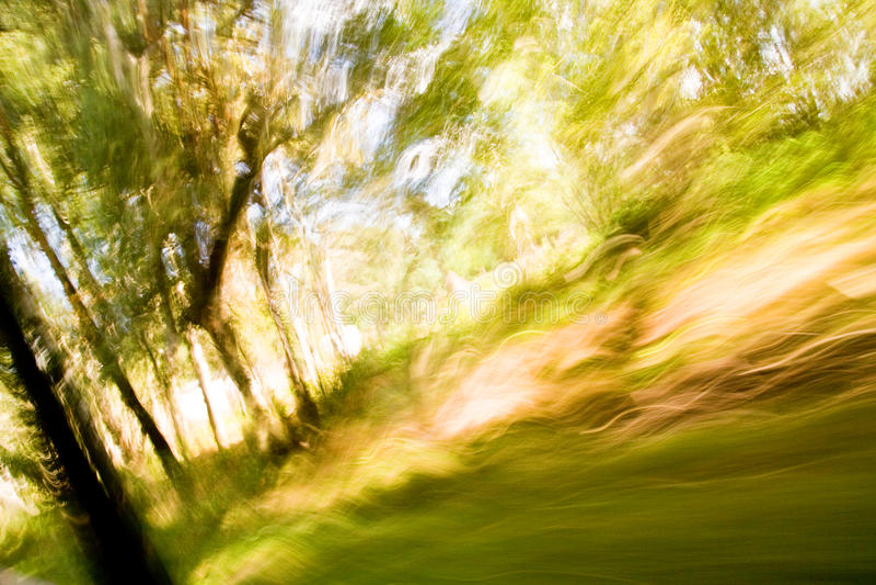 exponeringsskog som skjutas long royaltyfria foton