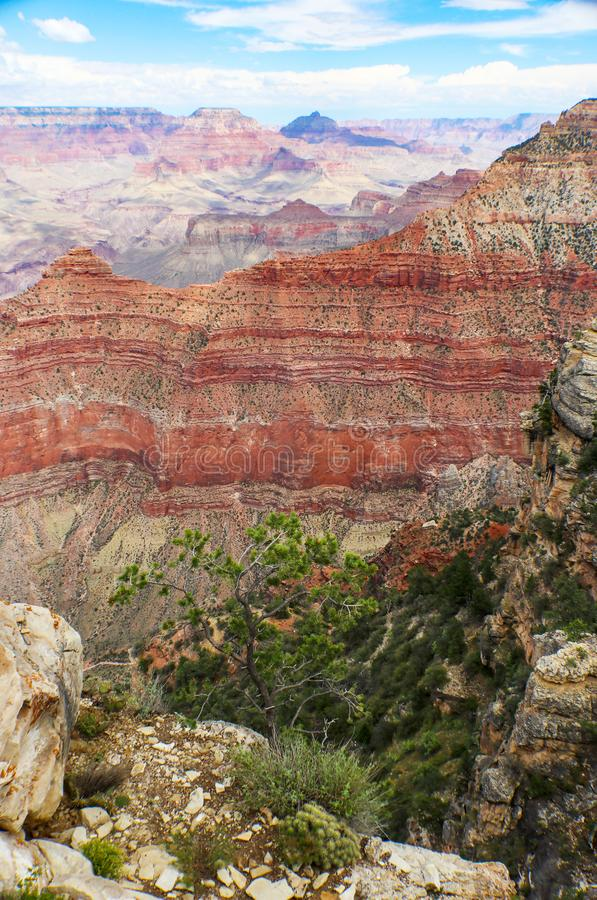 Exposed layers of geologial strata in the Grand Canyon with mesas in the background and rocks and a pine tree in the foreground. Exposed layers of geologial royalty free stock photo