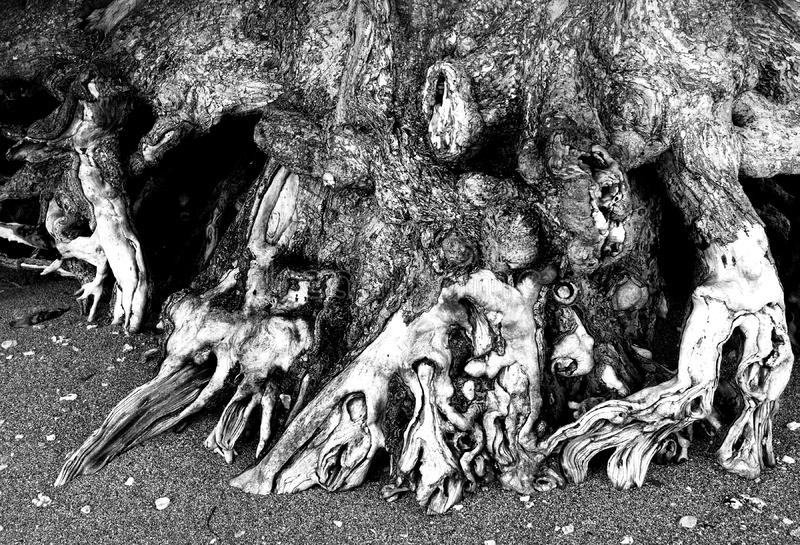 Download Exposed Roots Of A Tree In Kauai Hawaii Stock Image - Image of black, ground: 7033327