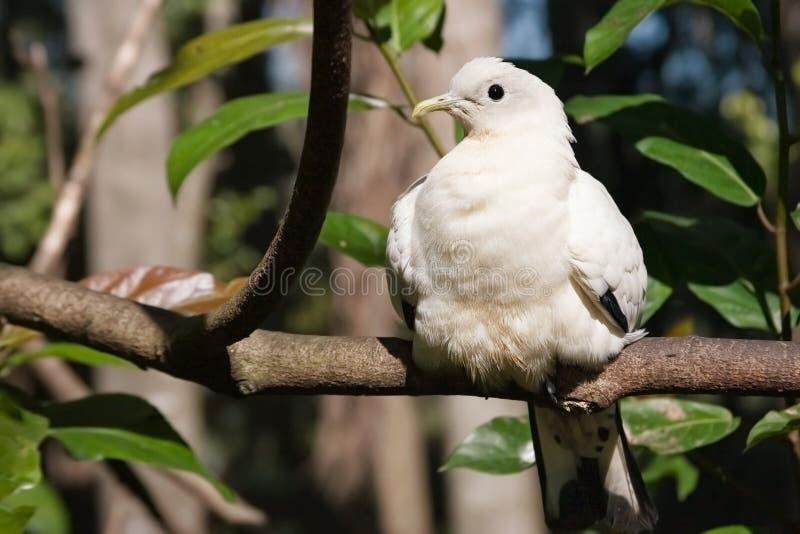 Exposer au soleil blanc d'oiseau photo libre de droits