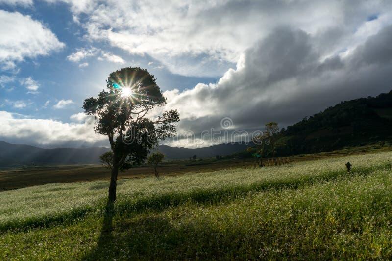 exposez au soleil et les arbres et le champ de moutarde avec la fleur blanche dans DonDuong - Dalat- Vietnam images stock