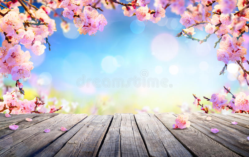 Exposição da mola - flores cor-de-rosa fotos de stock royalty free