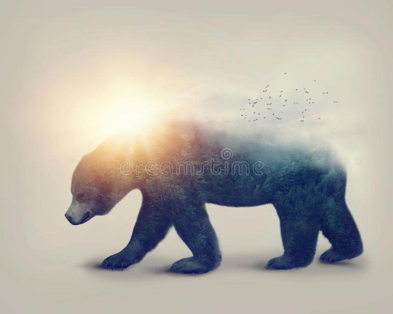 Exposição dobro com um urso imagens de stock royalty free