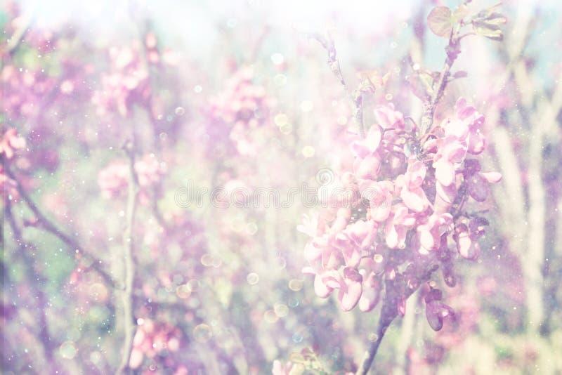Exposição dobro da árvore das flores de cerejeira da mola abstraia o fundo Conceito sonhador imagens de stock royalty free