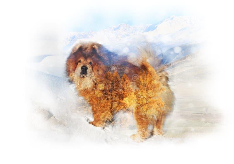 Exposição dobro de um cão e de uma paisagem ruivos da montanha fotos de stock royalty free
