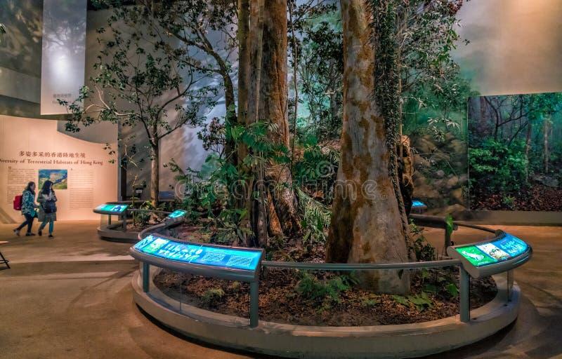 A exposição interior em Hong Kong Museum da história indica a natureza do ecossistema terrestre local fotos de stock royalty free