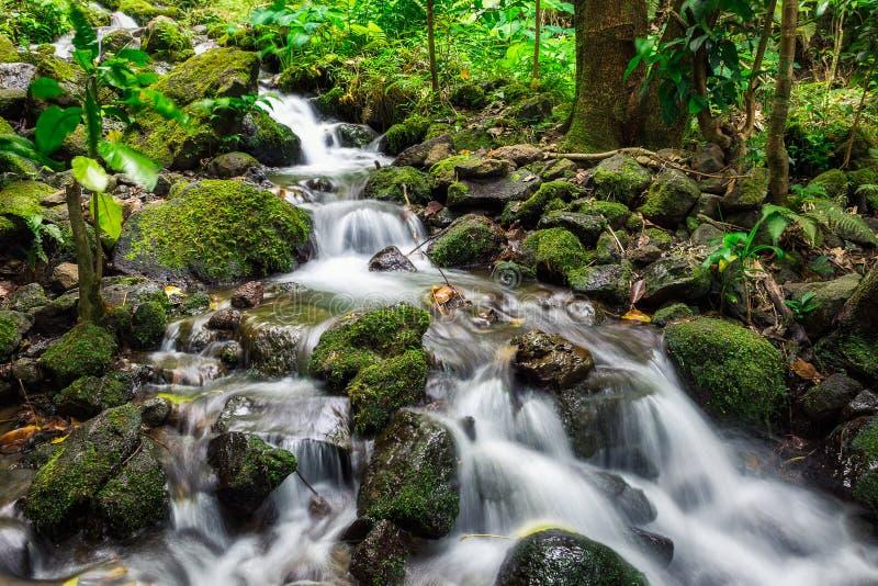 A exposição longa da cascata da angra disparou na floresta úmida da ilha de Oahu imagens de stock royalty free