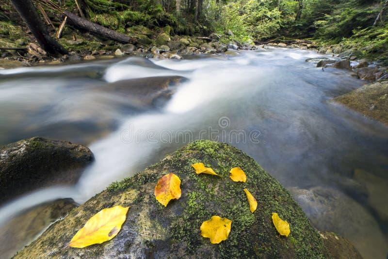 A exposição longa disparou do rio verde selvagem correndo através rápido pequeno da floresta da montanha com água de seda lisa cl imagens de stock
