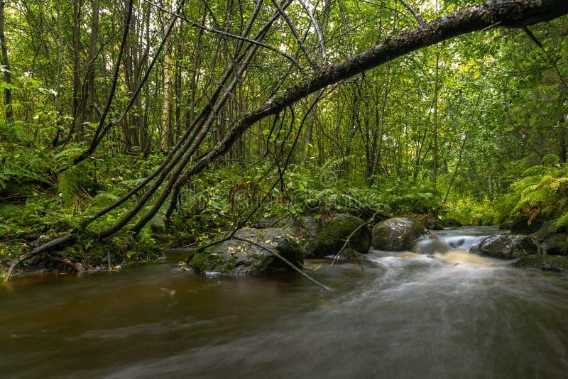 Exposição longa do outono do rio da floresta colorida imagens de stock royalty free