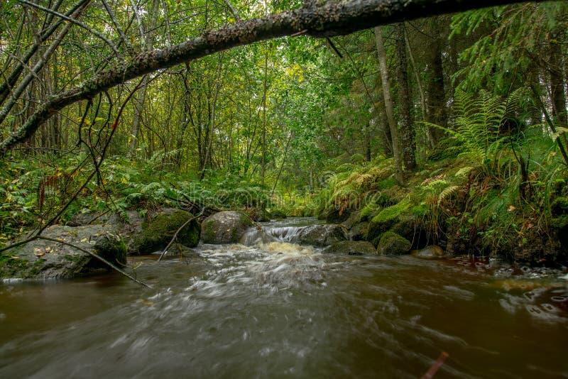 Exposição longa do outono do rio da floresta colorida fotos de stock