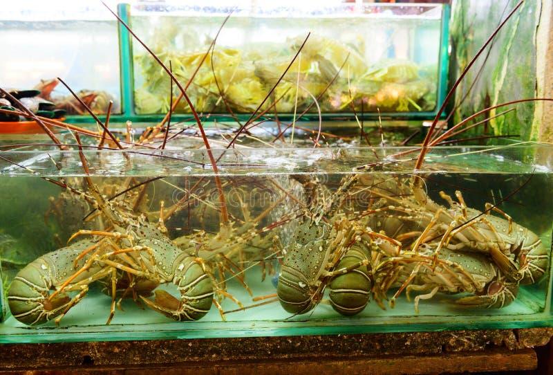 Exposição viva da lagosta dentro do tanque para a venda no mercado imagens de stock