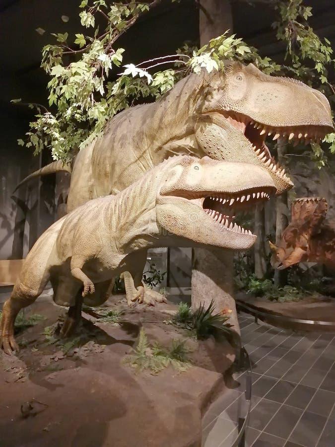 Exposición de dinosaurios en el Museo de la Naturaleza de Canadá imagen de archivo libre de regalías