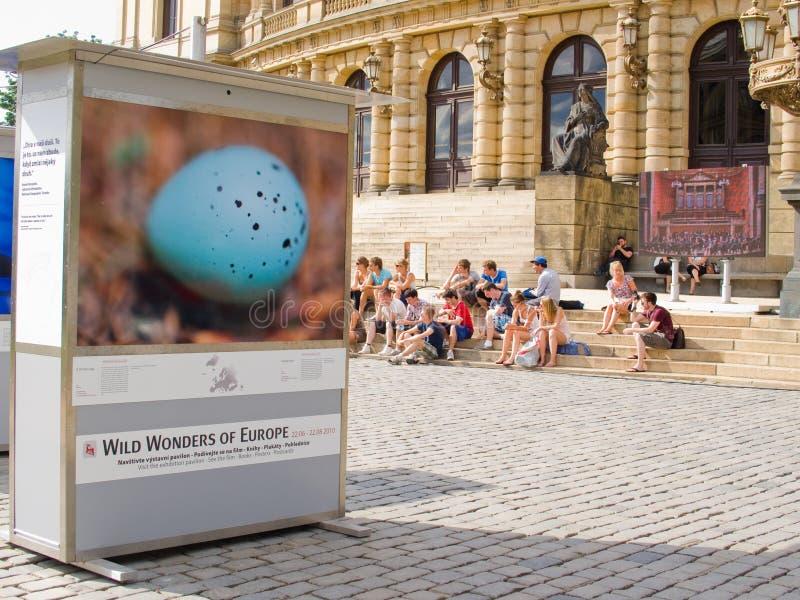 Exposición de la fotografía de la naturaleza imagen de archivo libre de regalías
