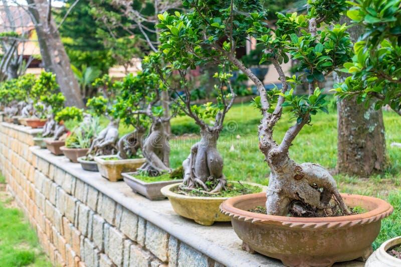 Exposición de los árboles miniatura del ikebana en potes en el cercado de piedra fotos de archivo