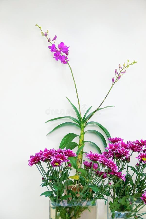 Exposición del crisantemo imágenes de archivo libres de regalías