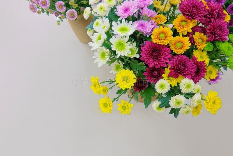 Exposición del crisantemo fotos de archivo