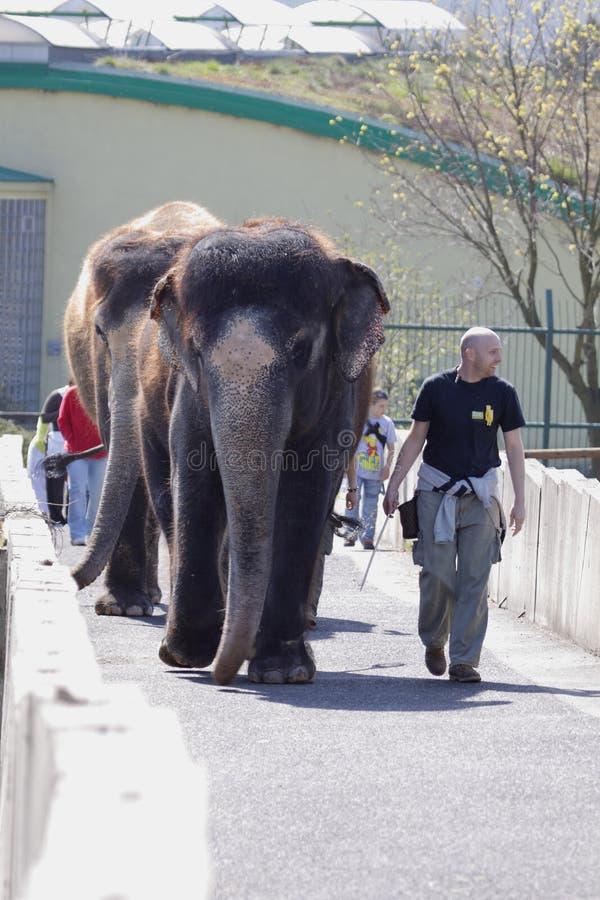 Exposición del elefante fotografía de archivo