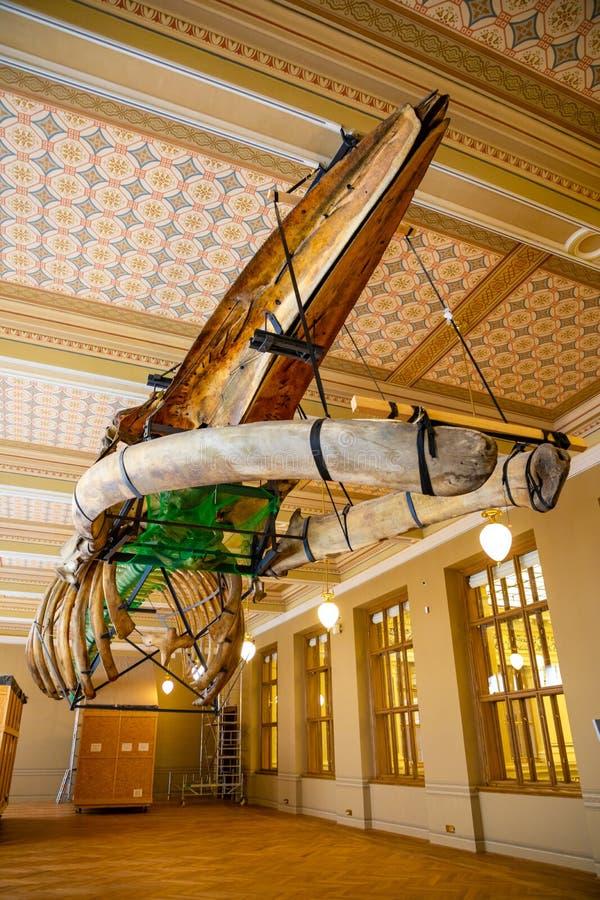 Exposici?n del Museo Nacional en el edificio recientemente renovado en 2018 en Praga, Rep?blica Checa fotografía de archivo libre de regalías