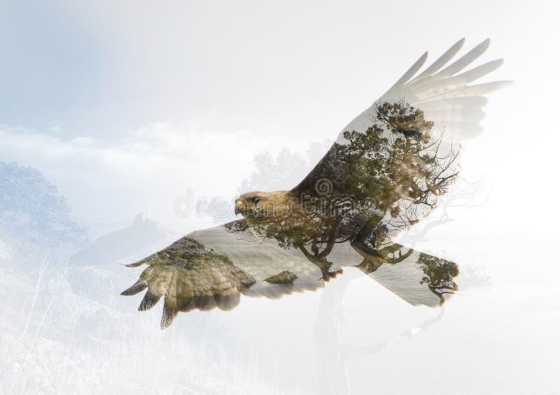 Exposición doble del halcón y del cabo Kapchik en Crimea foto de archivo libre de regalías