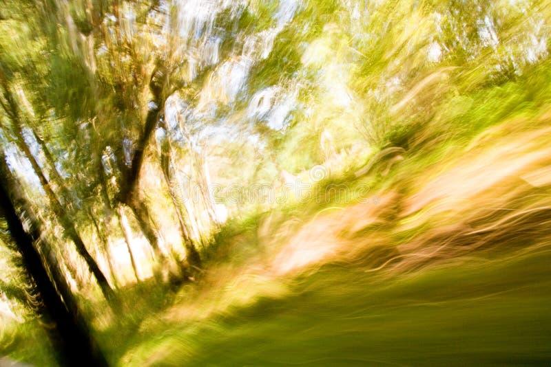 Exposición larga tirada de un bosque fotos de archivo libres de regalías