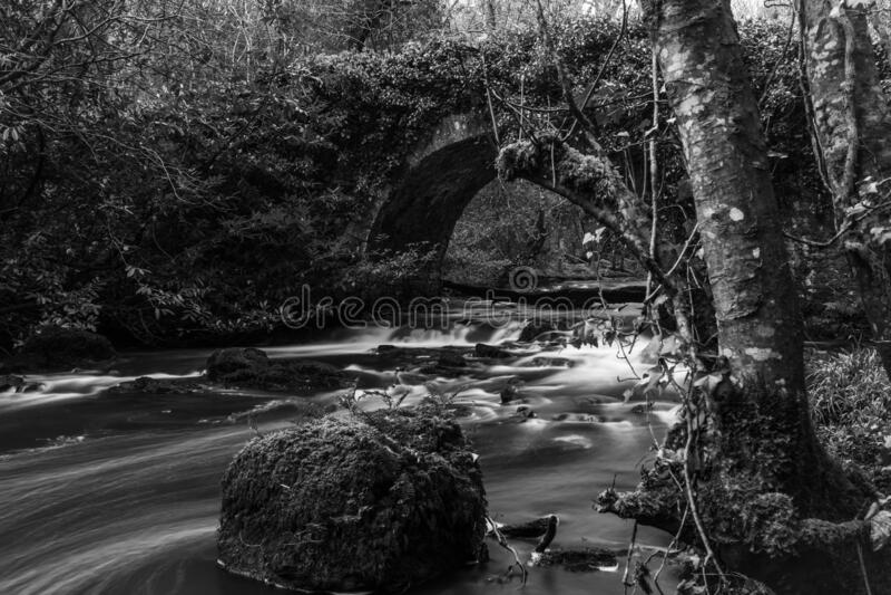 exposición prolongada del río forestal fotos de archivo libres de regalías