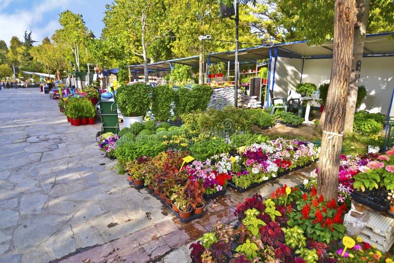 Exposition annuelle de fleur à la montagne Aigaleo Grèce images stock