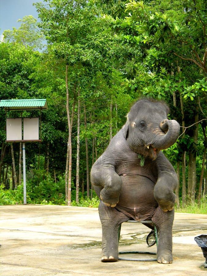 Exposition d'éléphant images libres de droits