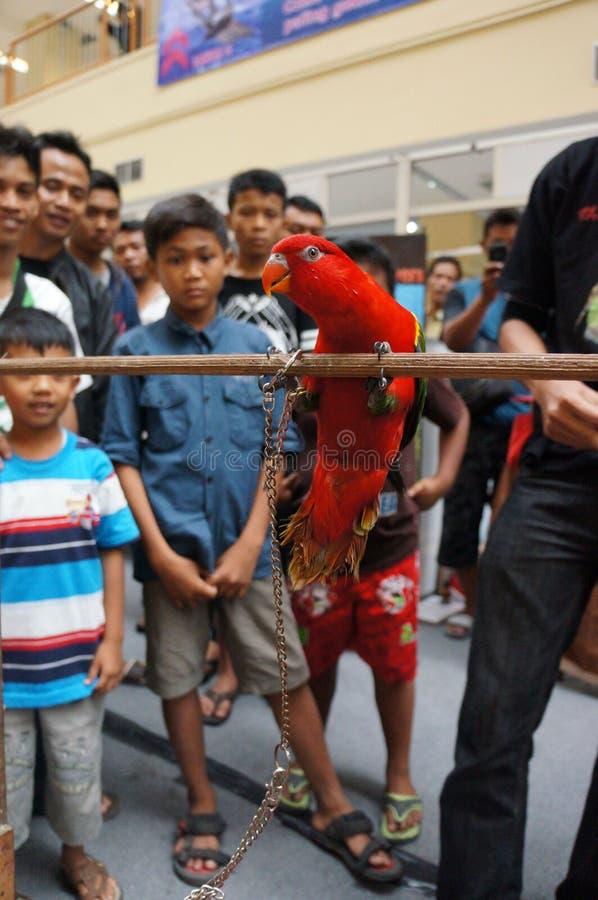 Exposition d'oiseaux photo libre de droits