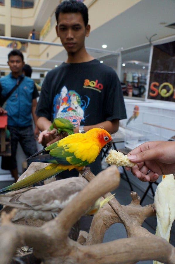 Exposition d'oiseaux image stock