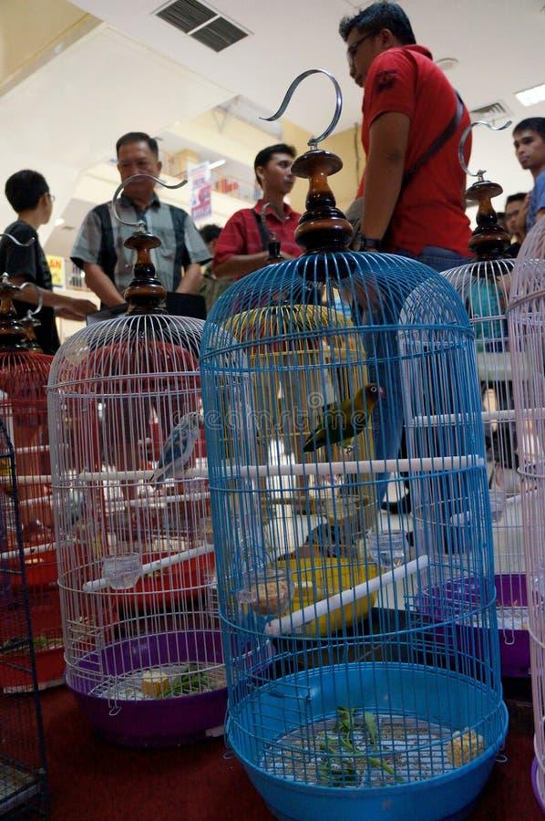 Exposition d'oiseaux photos stock