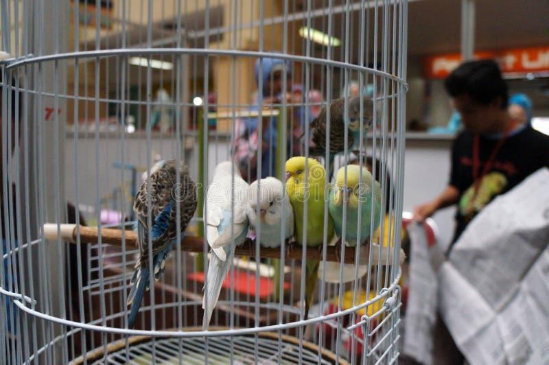Exposition d'oiseaux photo stock