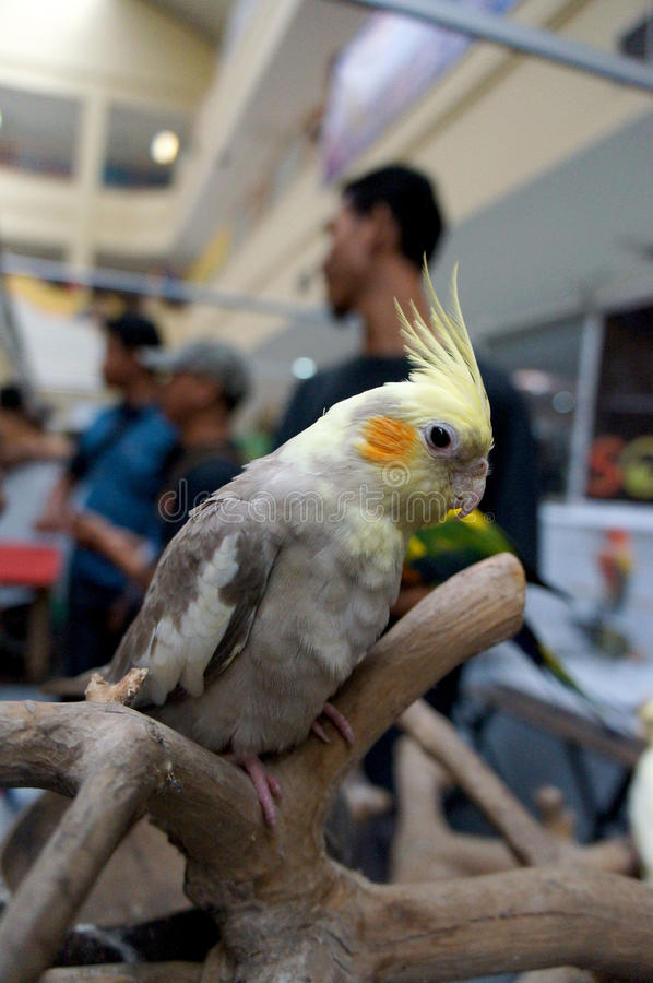 Exposition d'oiseaux images stock