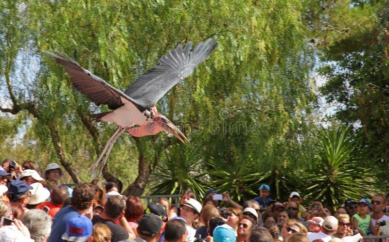 Exposition d'oiseaux au zoo image libre de droits