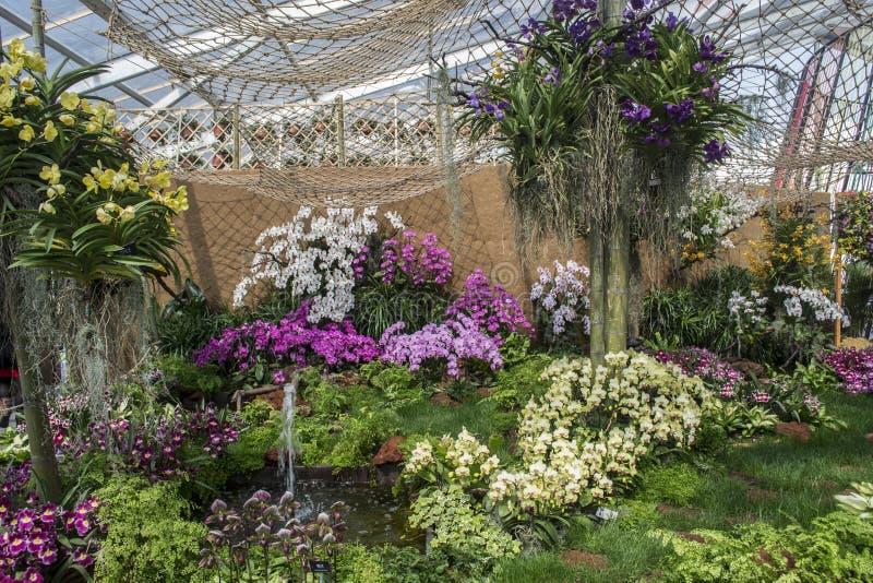 Exposition d'orchidée photo stock